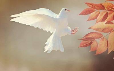 Meditation für inneren und äußeren Frieden